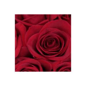 6 Luxury Naomi Roses