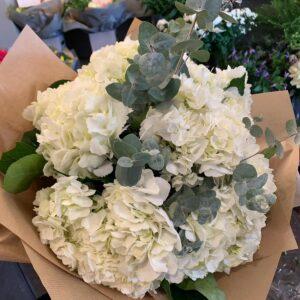 Hydrangea Happiness White